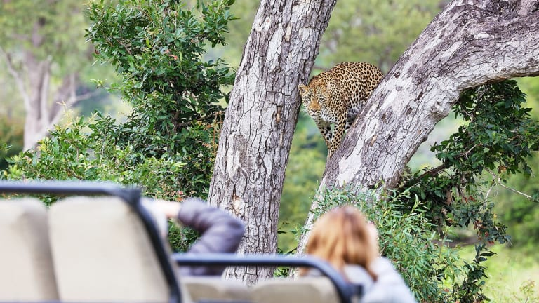 Londolozi Private Game Reserve: South Africa's Best Luxury Safari