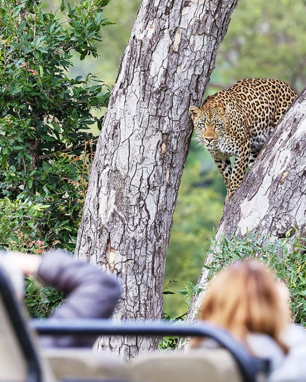 Londolozi Lodege, a place of dreams.